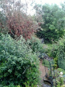 July 2012 - my garden is full up, and my Eucalyptus tree is dying due to the drought :(