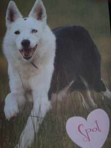 Spot's valentine card to me