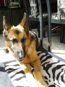 Myschka enjoying the sun on her cushion by the patio doors