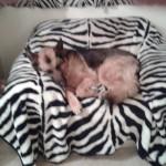 Myschka in her chair