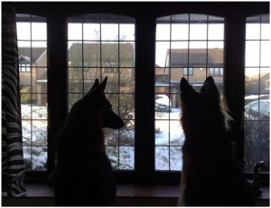 Window Watching - Waiting for the Postman