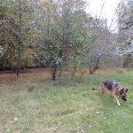Myschka on her walk