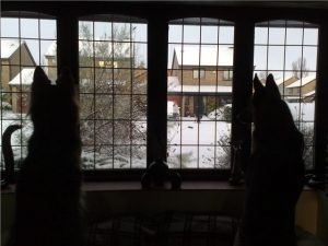 Dogs checking out the snow 18.12.09