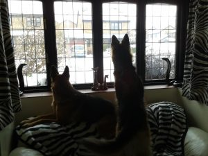 Myschka and Jezebel on guard