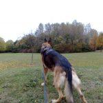 Myschka looking for rabbits